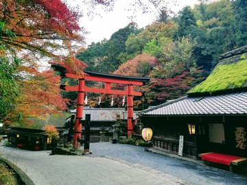 Kyoto Adventures – Saga Toriimoto